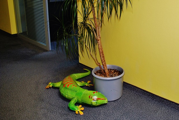 o gekona zakopnete i na chodbě ve společnosti ANVI TRADE, foto: Zdeněk Nesveda